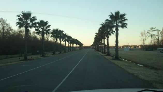 Palm Trees leading into NOLA